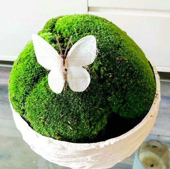 #moss with butterfly.jpg