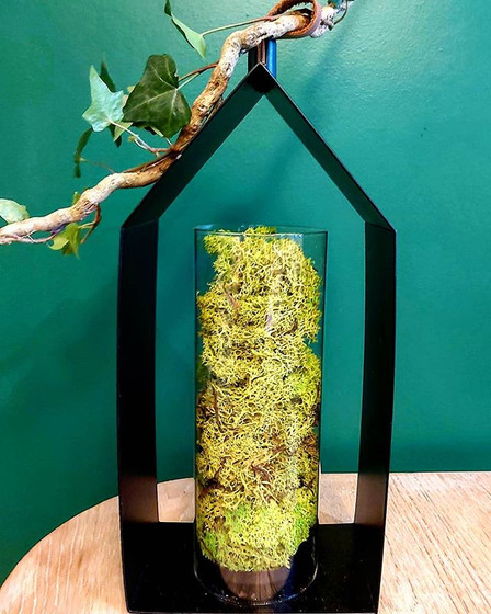 #stabilished moss#home decoration#.jpg