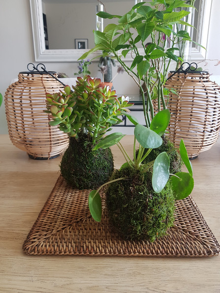creation-florale-deco-kokedama-23.jpg