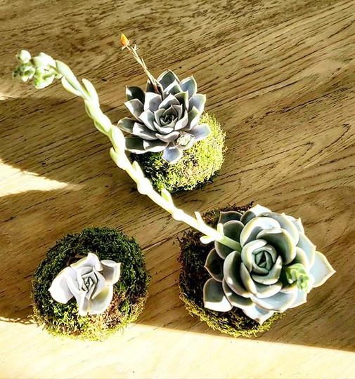 #kokedama#little succulente.jpg