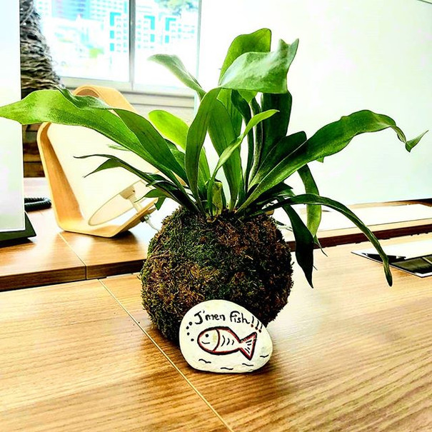 #think Kokedama #business.jpg