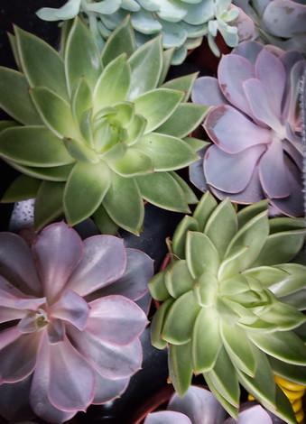 creation-florale-deco-kokedama-plante-gr