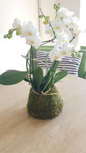 creation-florale-deco-kokedama-5.jpg