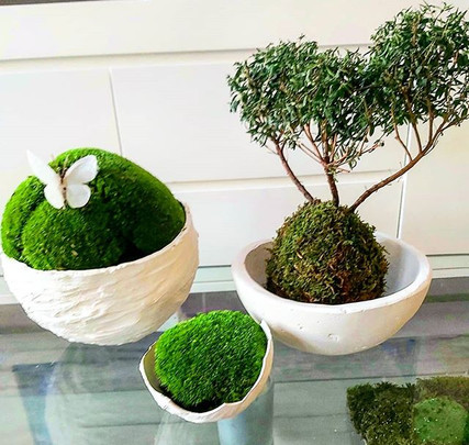 #kokedama#stabilished moss #lovely butte