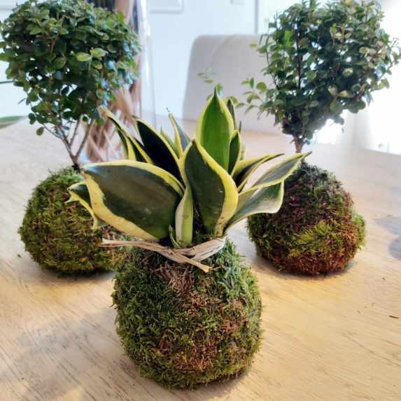 creation_florales_kokedama-50.jpg