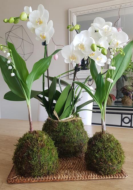creation-florale-deco-kokedama-12.jpg