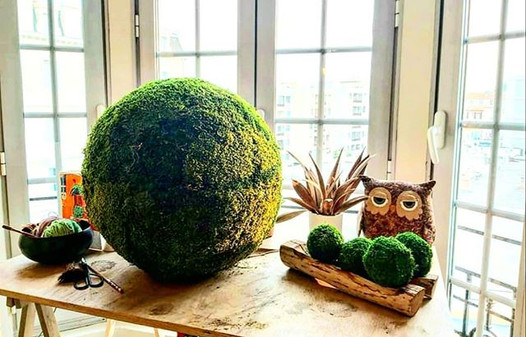 #Moss ball#big kokedama#stabilished moss