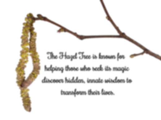 Common hazel tree twig with male and fem