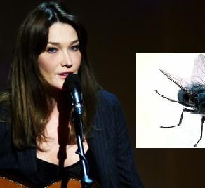 Un concert de Carla Bruni perturbé par une mouche