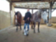 Trotz Kälte entspannte Pferde 🐴 bei der