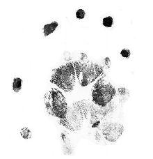 possum 1a.jpg