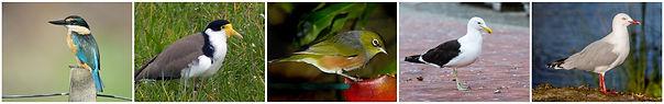 Native birds 2019.jpg