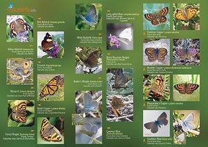 Butterfly poster-2.jpg