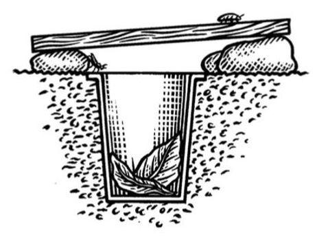 Pit fall trap by Alan Batley.JPG
