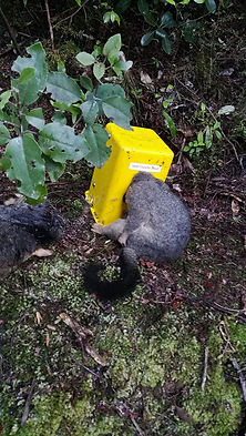 possum trap.jpg