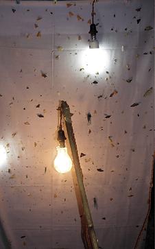 Light trap by Jatishwor Irungbam.png