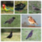 Exotic birds 2019.jpg