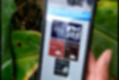 Weed home app.Still001.jpg