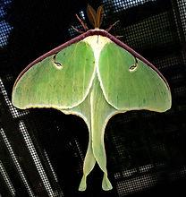 Logo Moth screen.jpg