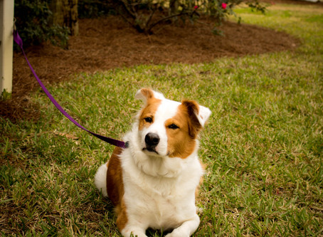 St. George Island - Finalist for Best City for Pet Travelers