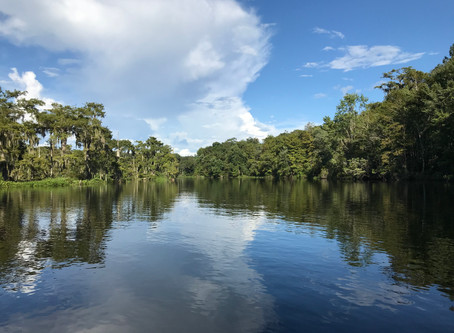 Birds and gators and manatees, oh my! - Wakulla Springs State Park