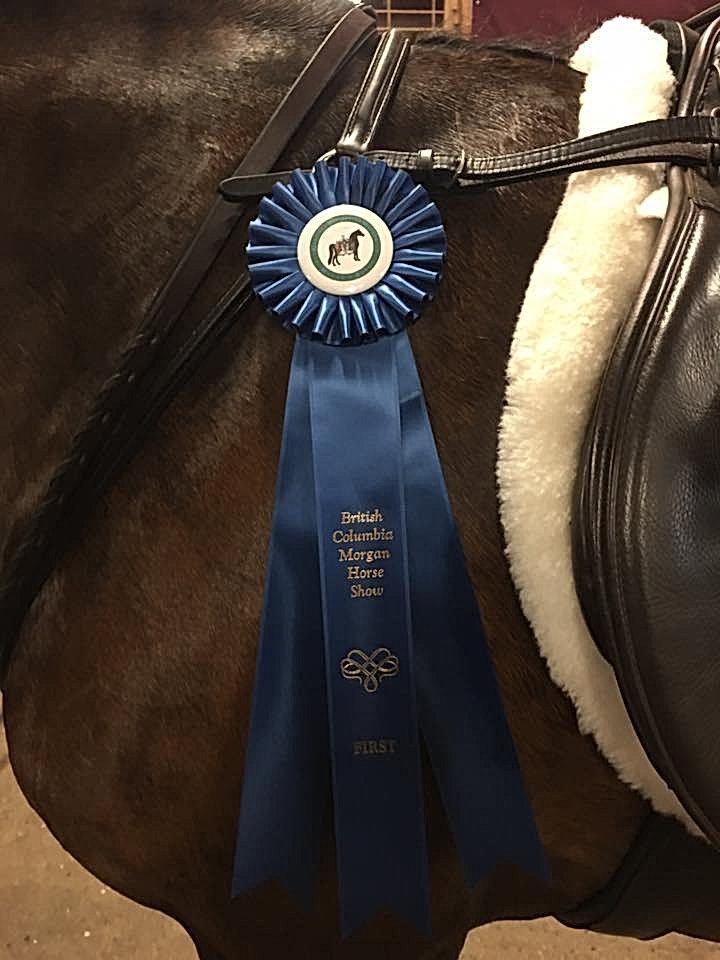 BC Morgan Horse