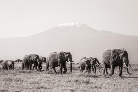 Majestic Walk in front of Kilimanjaro