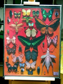 PapillonsHD