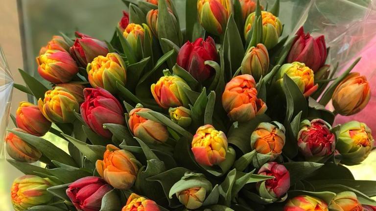 Tulipes 20 pièces