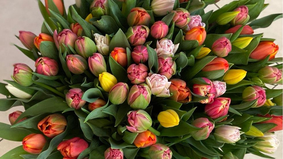 Tulipes 20 tiges