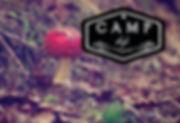 campfallLMback.jpg