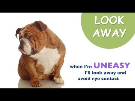 Understanding Dog Body Language Pt 1