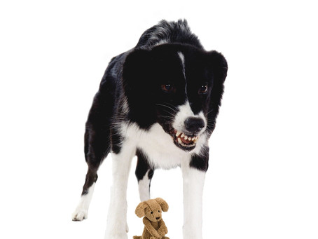 What is Dog Reactivity?