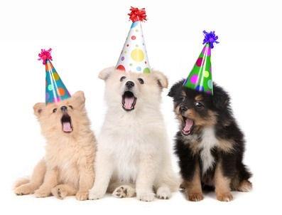 puppies-with-birthday-hats.jpg