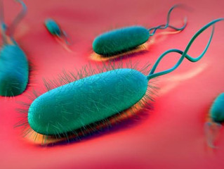 Gut, bugs, and a healthy microbiome