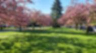 North Vancouver Tree Spring Primavera