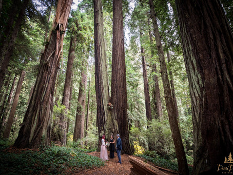 Planning Weddings in the Redwoods - In Compliance