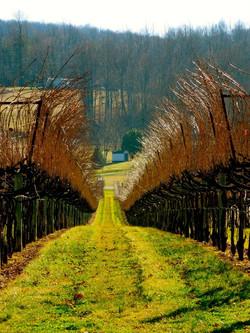 Horton Vineyards in Gordansville, va