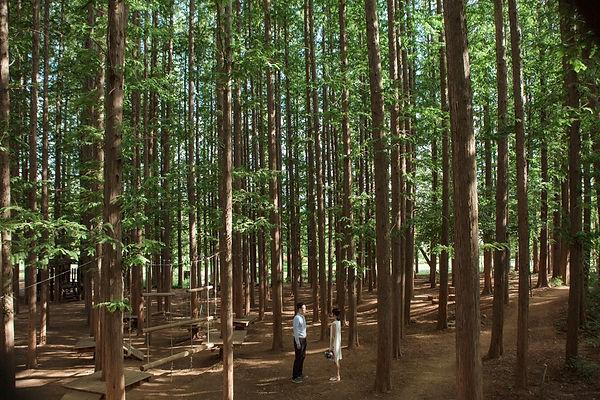 01 숲 (14).jpg