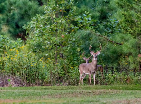 Guide to Lease Hunting in Iowa