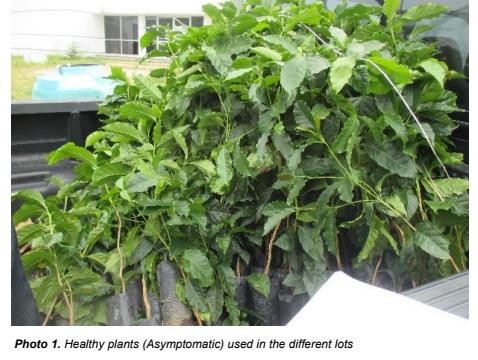 Healthy Seedlings