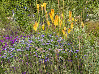 Colourful planted border