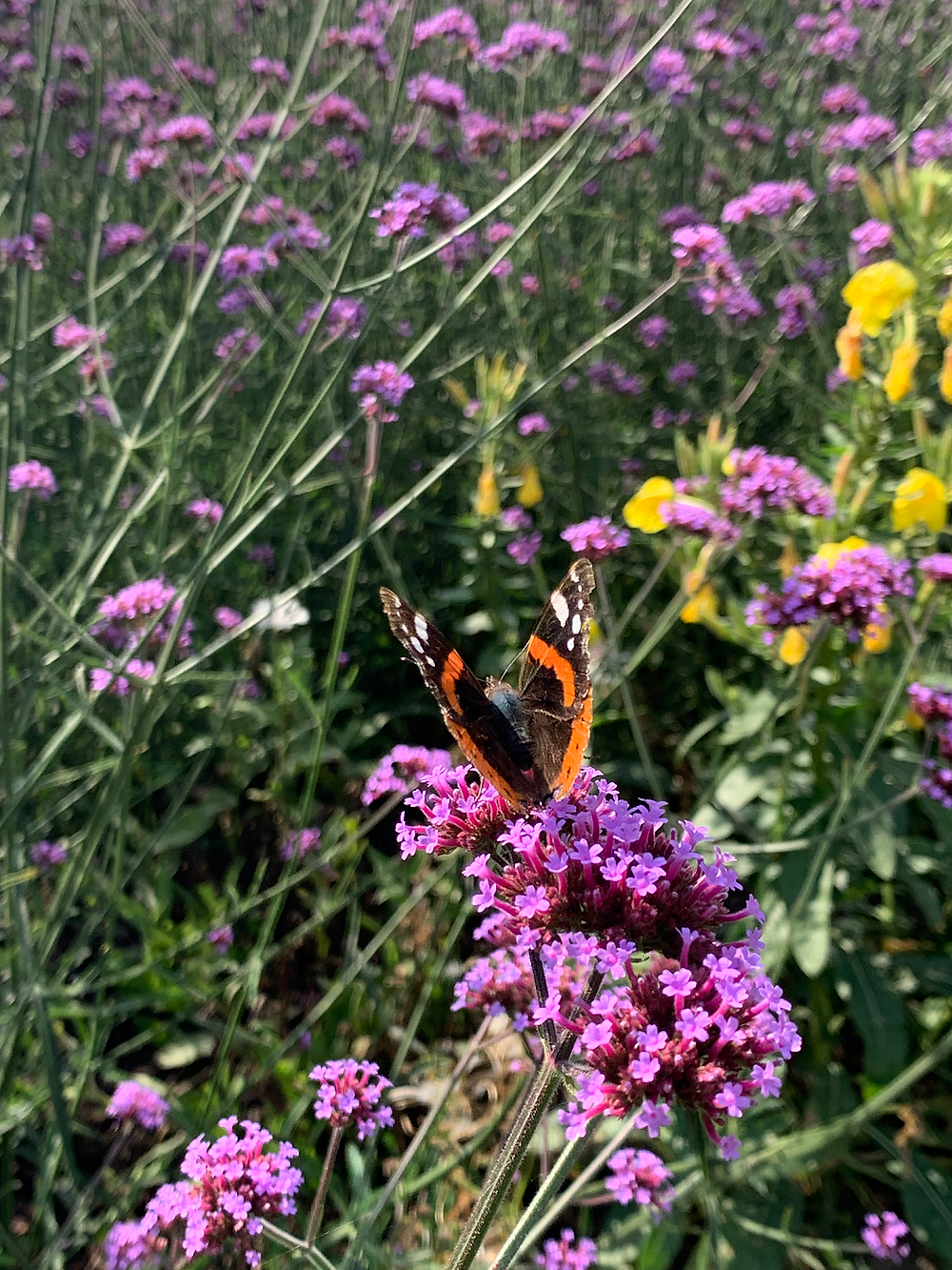 Purple and yellow flowers with a butterfly
