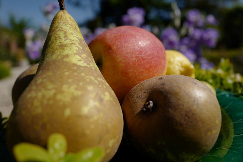 Fruit (Large).png