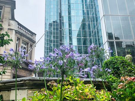 A Sneak Peek - Two Livery Gardens & a Stunning Rooftop
