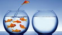7 passos para se detectar uma oportunidade empreendedora