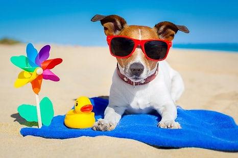 chien plage1.jpg