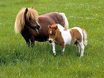 Pablo le petit poney