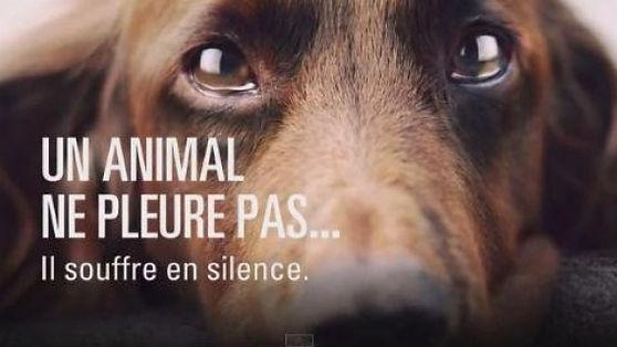 un animal ne pleure pas.jpg