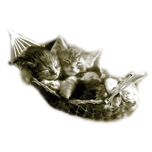chatons2.png